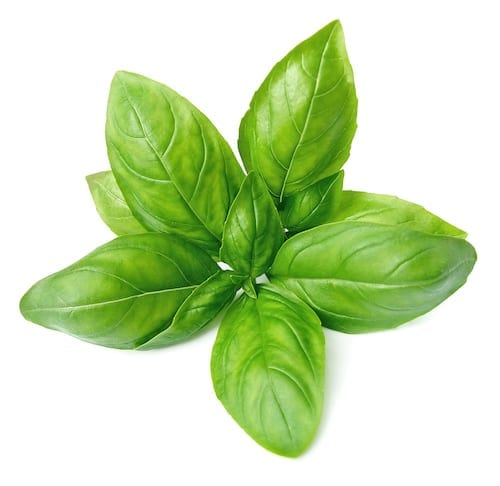 Photo of a Fresh Sprig of Basil