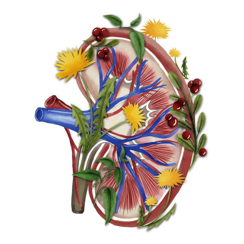 Watercolor Kidney T-Shirt with Flowers