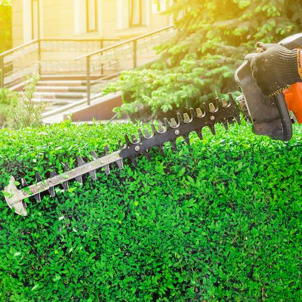 NH Pruning Services